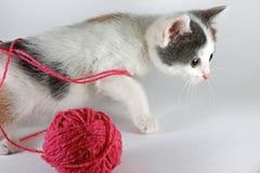Nette Kätzchenspiele mit Verwicklung des Garns Lizenzfreies Stockfoto