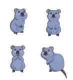 Nette Karikatur lächelnde quokka Tiere in den verschiedenen Haltungen Stockbild