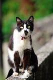 Nette Katze Lizenzfreie Stockfotos