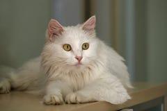 Nette Katze. Lizenzfreies Stockfoto