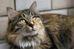 Nette Katze. Lizenzfreie Stockfotografie