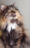 Nette Katze. lizenzfreie stockfotos