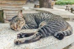 Nette Katze Lizenzfreie Stockbilder