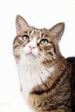 Nette Katze. Lizenzfreies Stockbild