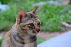 Nette Katze Stockbild
