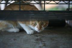 Nette Katze Lizenzfreies Stockfoto