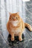 Nette Katze auf dem Boden Stockbilder