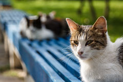 Nette Katze auf der Bank vor dem Parlament von Tiraspol Lizenzfreies Stockfoto