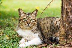 Nette Katze auf Naturhintergrund Lizenzfreies Stockbild