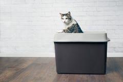 Nette Katze der getigerten Katze, die aus einem grauen Spitzeneintrittskatzenklo heraus neugierig schaut stockfotos
