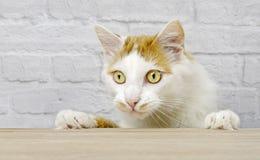 Nette Katze der getigerten Katze, die dem Tisch neugierig betrachtet stockfotografie