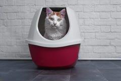 Nette Katze der getigerten Katze unter Verwendung eines roten, geschlossenen Katzenklos lizenzfreie stockfotografie