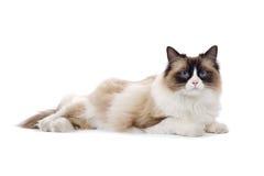 Nette Katze, die auf dem Boden liegt Lizenzfreies Stockbild