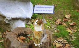Nette Katze, die auf einem Baumstumpf sitzt Stockfoto