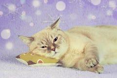 Nette Katze, die auf einem Kissen schläft stockfoto