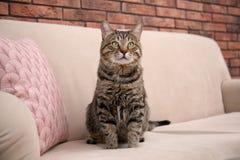 Nette Katze, die auf Sofa sitzt lizenzfreie stockfotografie