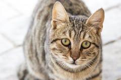 Nette Katze, die gerade der Kamera betrachtet Stockfotos