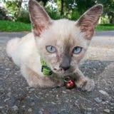 Nette Katze, die sein verfügbares Licht des Lebens genießt Stockbilder