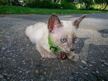 Nette Katze, die sein verfügbares Licht des Lebens genießt Stockbild