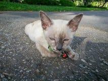 Nette Katze, die sein verfügbares Licht des Lebens genießt Lizenzfreie Stockfotografie
