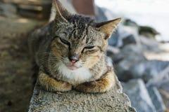 Nette Katze, die seine Lebensdauer genießt Lizenzfreie Stockfotografie