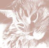 Nette Katze entspannte sich das Schauen zur Seite, Porträt eines Katze ` s Gesichtes im Profil Lizenzfreie Stockfotos