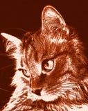 Nette Katze entspannte sich das Schauen zur Seite, Porträt eines Katze ` s Gesichtes im Profil Stockfotos