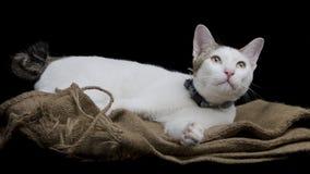 Nette Katze gelegt auf Sackleinen Stockfotos