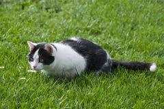 Nette Katze im Gras Lizenzfreie Stockfotografie