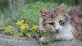 Nette Katze im Topf lizenzfreie stockfotografie