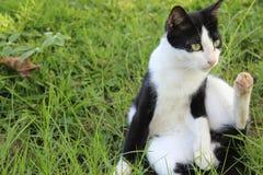 Nette Katze im Yard Stockfotos