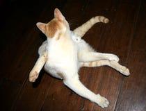 Nette Katze ist haariger Pussy hinter seinem Stockfotografie