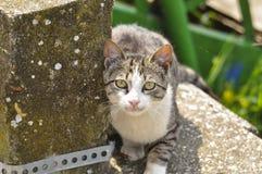 Nette Katze legen sich auf dem Beton hin Faule Katze sitzen auf konkretem Portr?t der Katze aus den Grund lizenzfreie stockfotografie