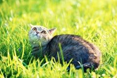 Nette Katze liegt auf dem grünen Rasen lizenzfreies stockfoto