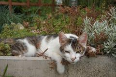 Nette Katze liegt in einem Blumenbeet und völlig entspannt stockfotos