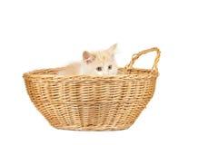 Nette Katze lokalisiert über weißem Hintergrund Stockfotografie