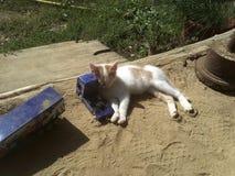 Nette Katze mit Spielzeug lizenzfreies stockbild