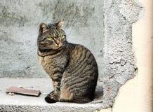 Nette Katze in Portovenere lizenzfreie stockfotos