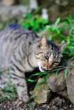 Nette Katze-Schnüffelnanlage Stockbild