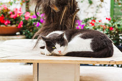 Nette Katze in Sperlonga Italien Stockfotos