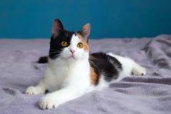Nette Katze steht auf der purpurroten Decke auf einem Bett still Lizenzfreies Stockfoto