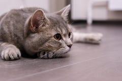 Nette Katze zu Hause stockfotos
