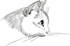 Nette Katzekopfauslegung Stockfotos