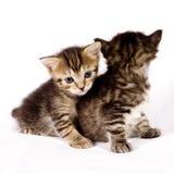 Nette Katzen Lizenzfreie Stockfotografie