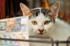 Nette Katzen Stockfotos