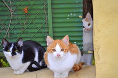 Nette Katzen Stockfotografie