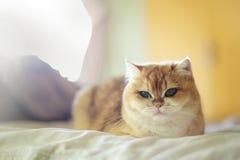 Nette Katzen Lizenzfreie Stockfotos