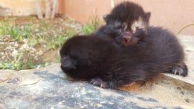 Nette Katzen Lizenzfreies Stockfoto