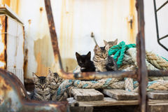 Nette Katzen auf alter hölzerner Palette und abgenutzten Marine-Seilen Stockbilder