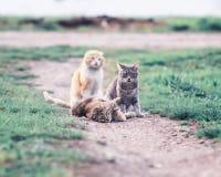 Nette Katzen, die auf einer grünen Wiese im Vorfrühling und im Spiel g liegen Stockfotos